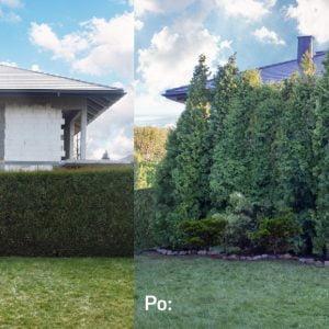Uciążliwy sąsiad, budowa – osłoń się ścianą zieloną – wysokie, duże drzewa, krzewy, tuje szmaragd