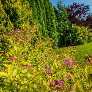 Moda na jesień, jesienny ogród – ściana zielona z drzew – wysokie, duże drzewa, krzewy, tuje szmaragd