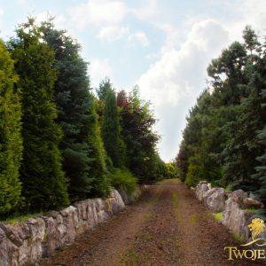 Ogród marzeń, jesienny ogród – ściana zielona z drzew iglastych – wysokie, duże drzewa, krzewy, tuje