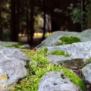 Górski ogród, ogród marzeń – ściana zielona z drzew – wysokie, duże drzewa, krzewy, tuje