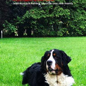 Pies w ogrodzie, twój ogród - twoje miejsce – ściana zielona – wysokie, duże drzewa, krzewy, tuje