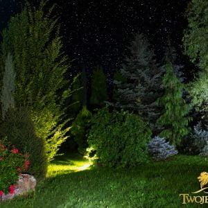 Ogród świateł Kraków – ściana zielona z drzew iglastych – wysokie, duże drzewa, krzewy, tuje szmaragd